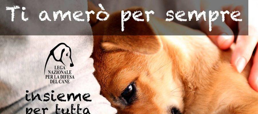 Contest #tiameròpersempre – Adotta un cucciolo
