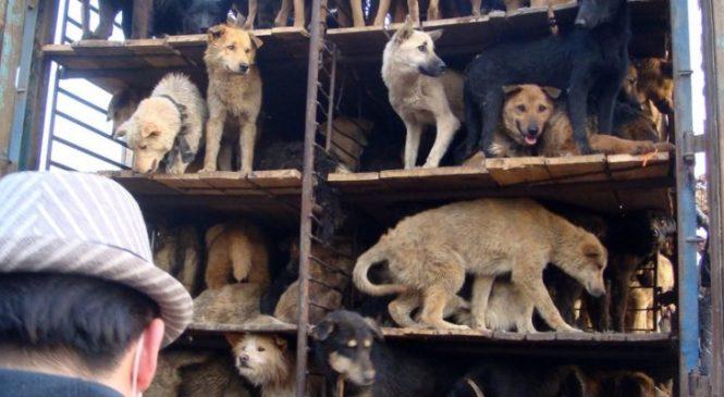 Ogni anno in Asia uccisi 30 milioni  di cani: «stop alla barbarie»