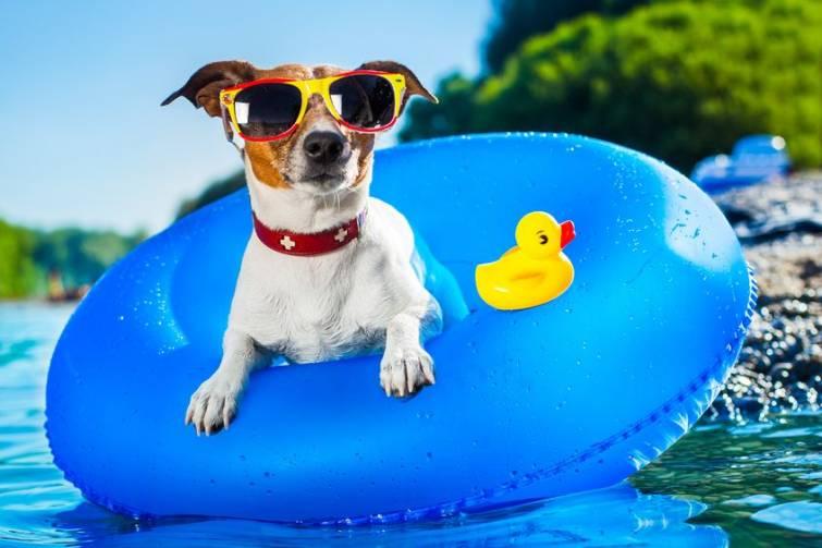 Semplici regole per assicurare il benessere dei nostri animali anche con le alte temperature
