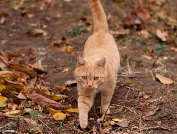 I giretti segreti dei gatti spiati dal GPS