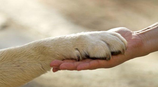 Chiesta l'istituzione di una giornata dedicata ai diritti degli animali