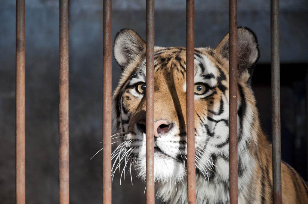 Maltrattamento animali, abbandonarli o non curarli è reato. Anche per i circhi