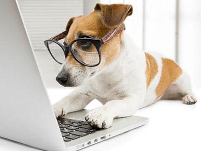 Anagrafe canina nazionale, opera incompiuta
