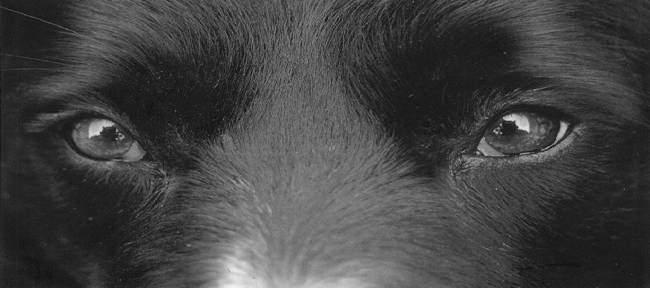 Violenze sugli animali – Necessario un cambiamento culturale
