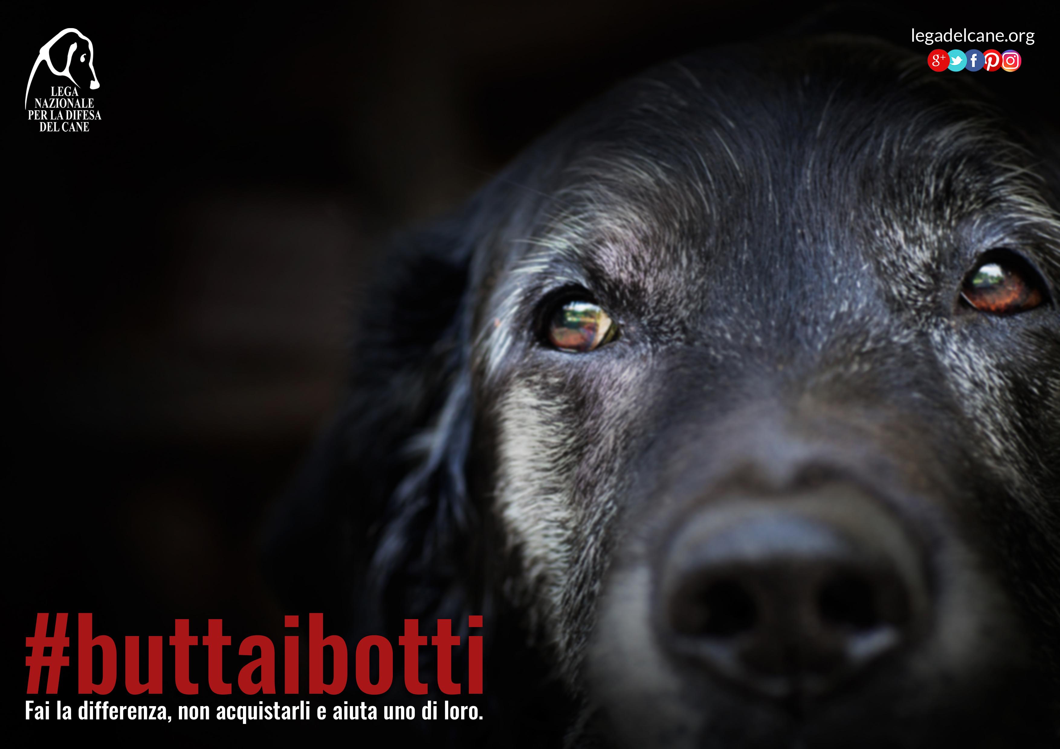 #buttaibotti 2016 – Un Capodanno all'insegna del rispetto