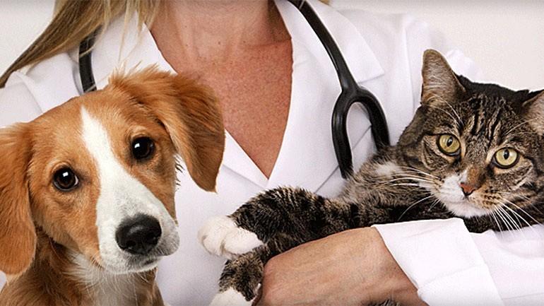 Lombardia – Cani e gatti in ospedale. Ma nessuno promuove il patentino per i proprietari