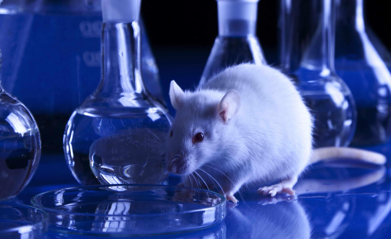 Sperimentazione animale – Al bando in Olanda dal 2025. E in Italia?