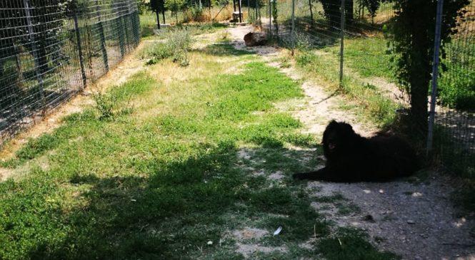 Bologna – Trebbo di Reno: un canile a misura di cane