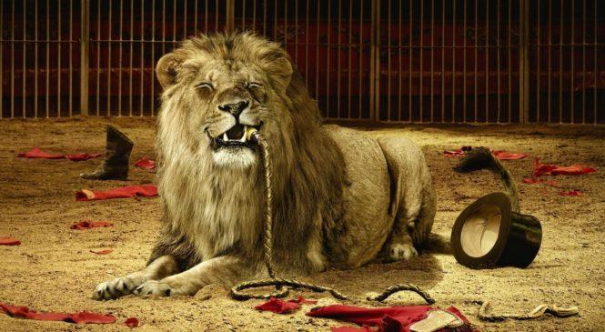 Circhi – Giovanardi contro il circo senza animali