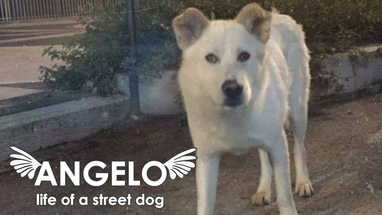 Angelo – Life of a Street Dog – il trailer