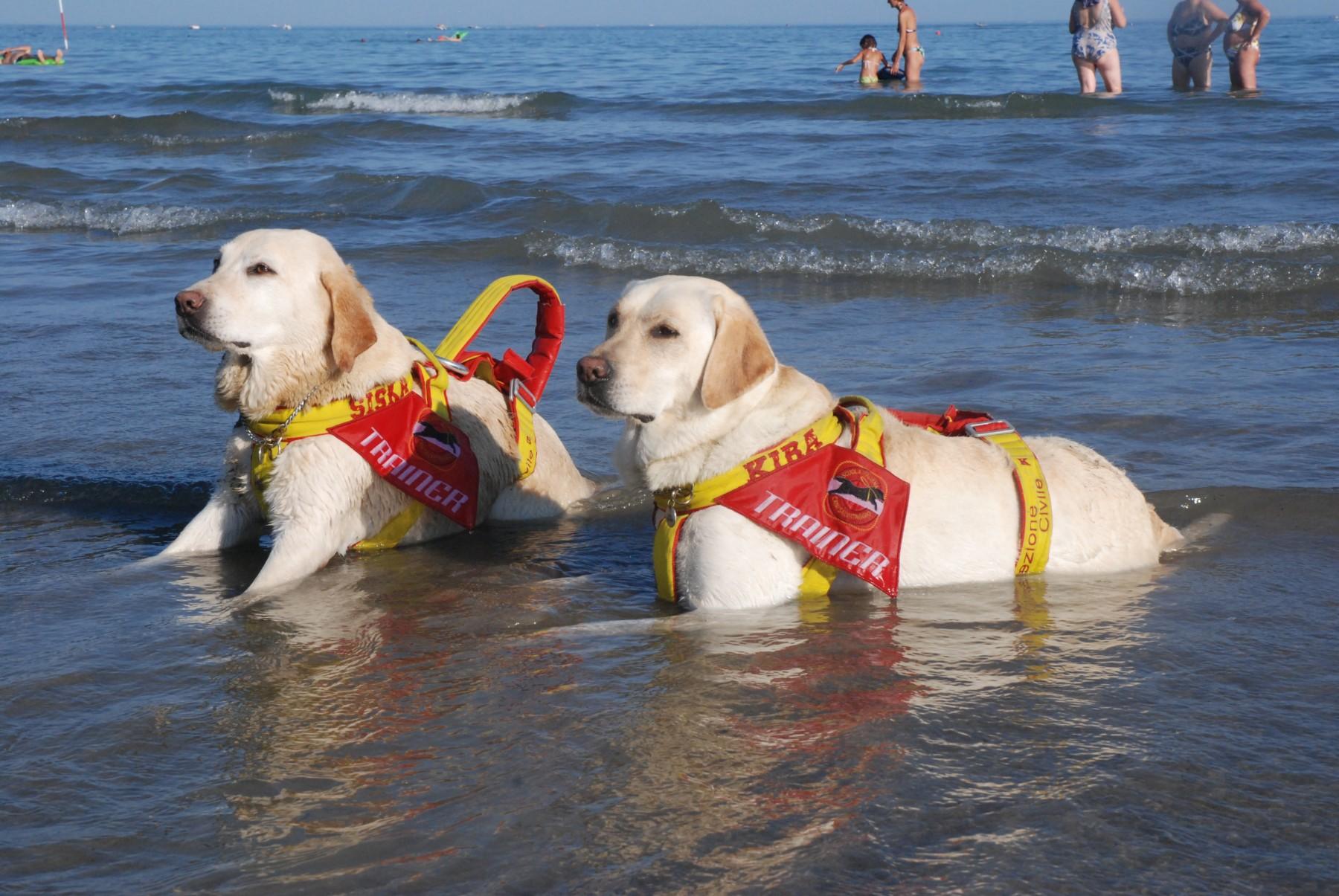 Cani da salvataggio: razze e caratteristiche