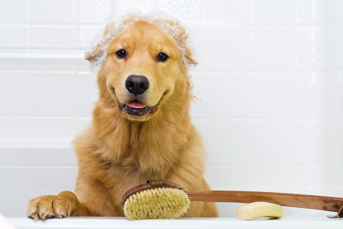 Toelettatura cane: tutti i consigli