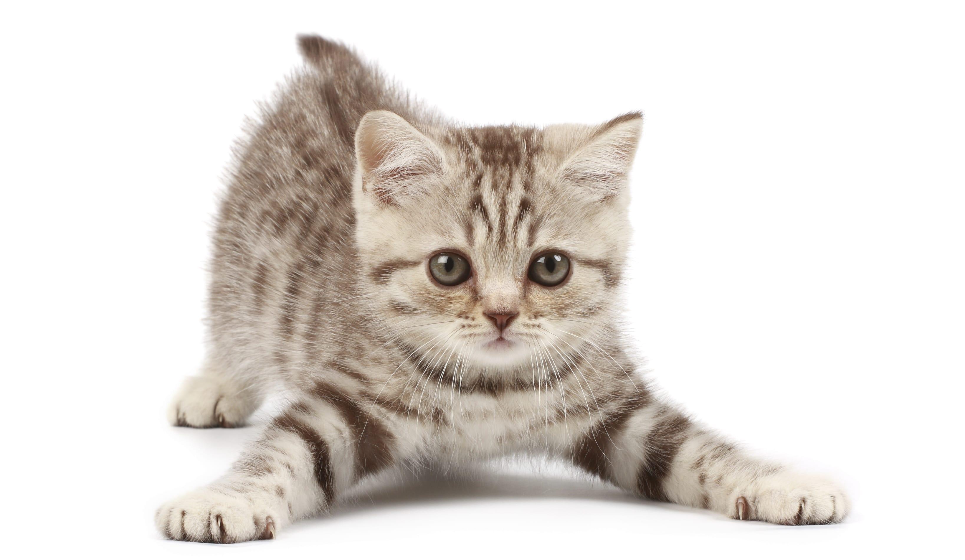 Gatti e carattere: uno sguardo alla personalità dei nostri felini