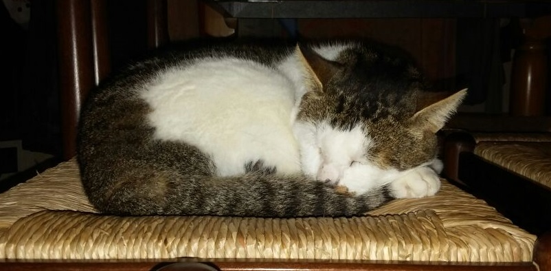 Come prendersi cura di un gatto con la FIV