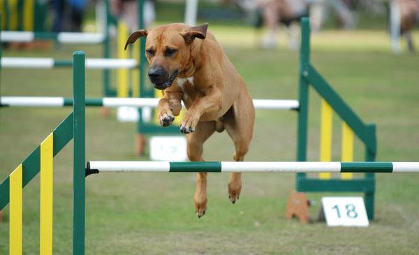 Cani e attività fisica: 5 esercizi da fare