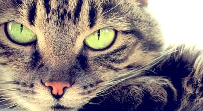 10 curiosità sui gatti
