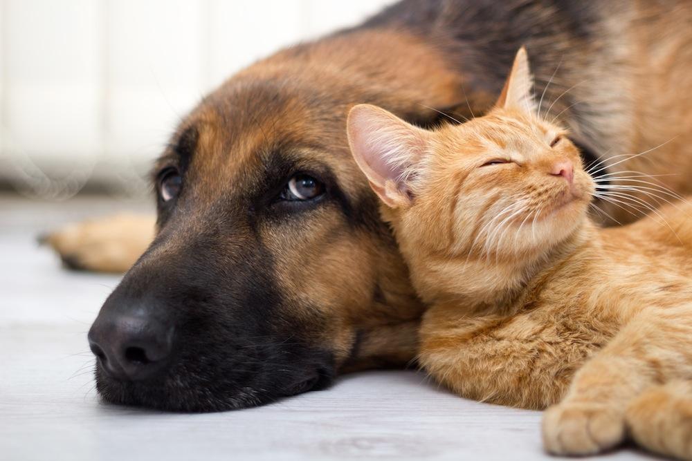 Convivenza tra cani e gatti: come fare