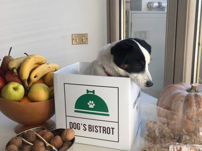 Dog's Bistrot: il servizio di consegna a domicilio per cani