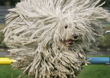 I cani più strani del mondo