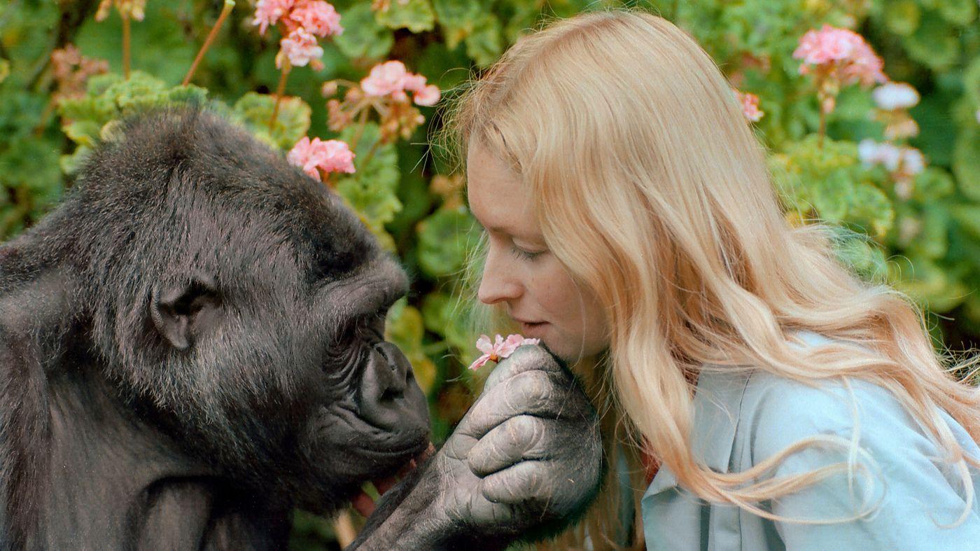 Gli animali hanno una coscienza?