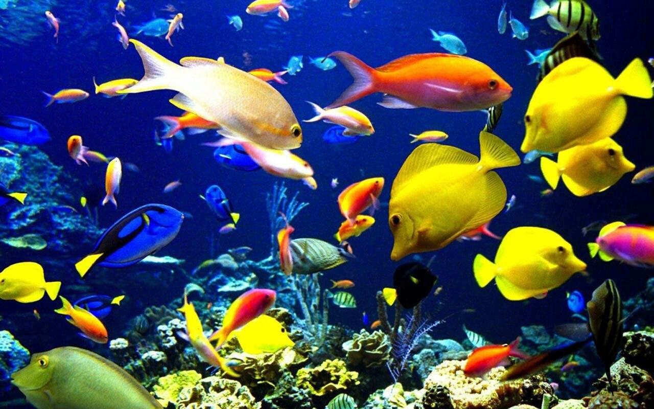 Cosa c'è da sapere sui pesci tropicali per acquario