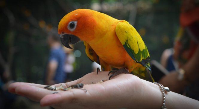 Uccelli da compagnia: quale scegliere