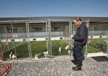 Come mettere su un allevamento di cani