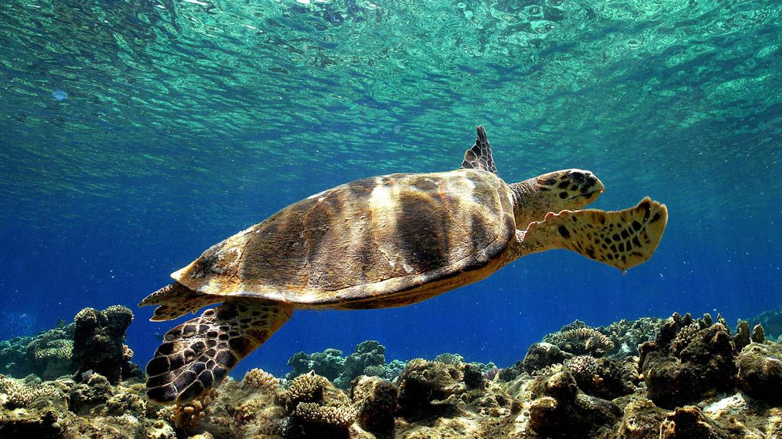 Vacanza/volontariato per salvare le tartarughe marine