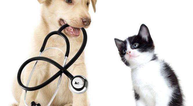 La tecnologia in campo veterinario