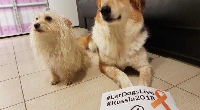 Strage di cani randagi in occasione dei mondiali di calcio