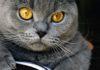 Come capire il linguaggio dei gatti