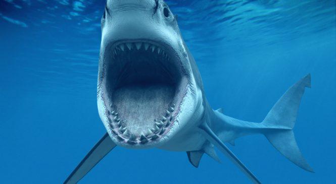 5 animali marini che è meglio non incontrare