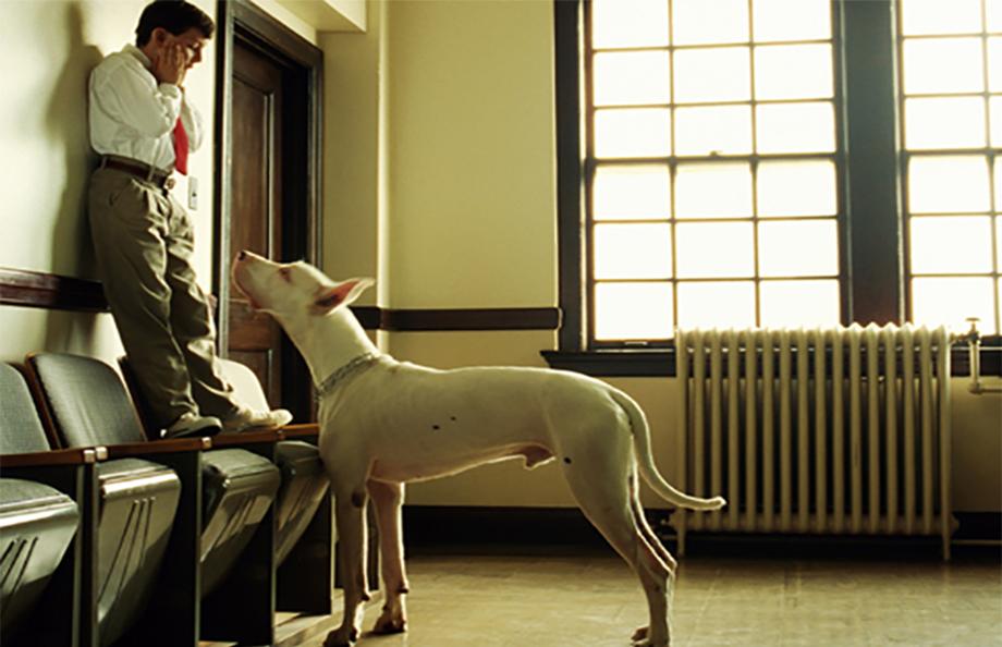 Fobia dei cani: come nasce e come intervenire