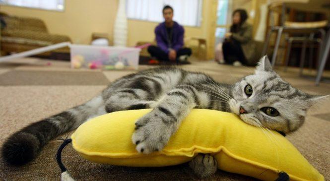 Cat Caffè – i locali dove l'attrazione principale sono i gatti