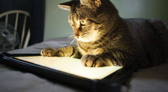 5 app gratuite per chi ha cani o gatti
