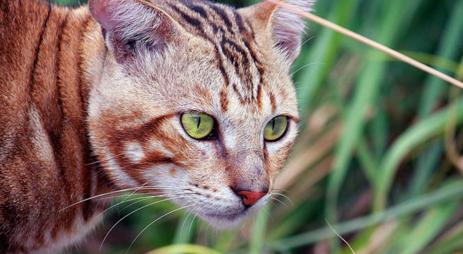 Calcoli nel gatto: sintomi e cure