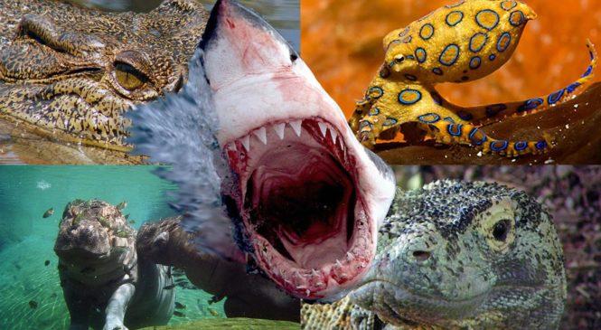 Gli animali più letali