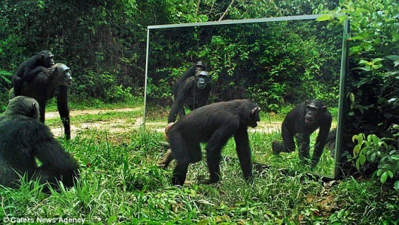 Animali allo specchio: chi sa riconoscersi?