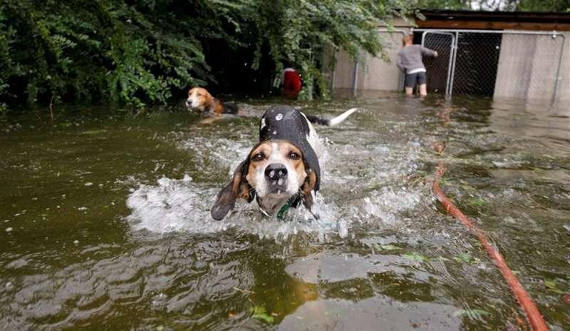 Animali abbandonati sotto l'uragano Florence