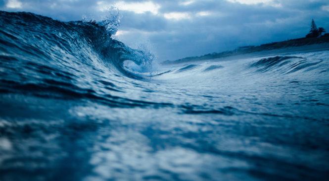 Ecco le destinazioni migliori per incontrare gli animali marini