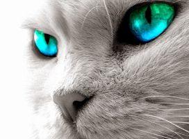 Gatti e leggende