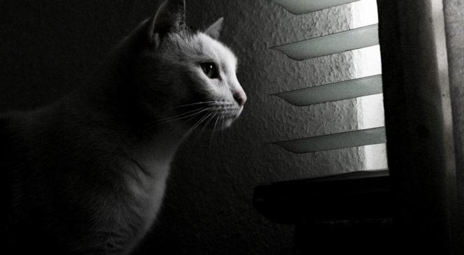 Gli animali hanno il senso del tempo?