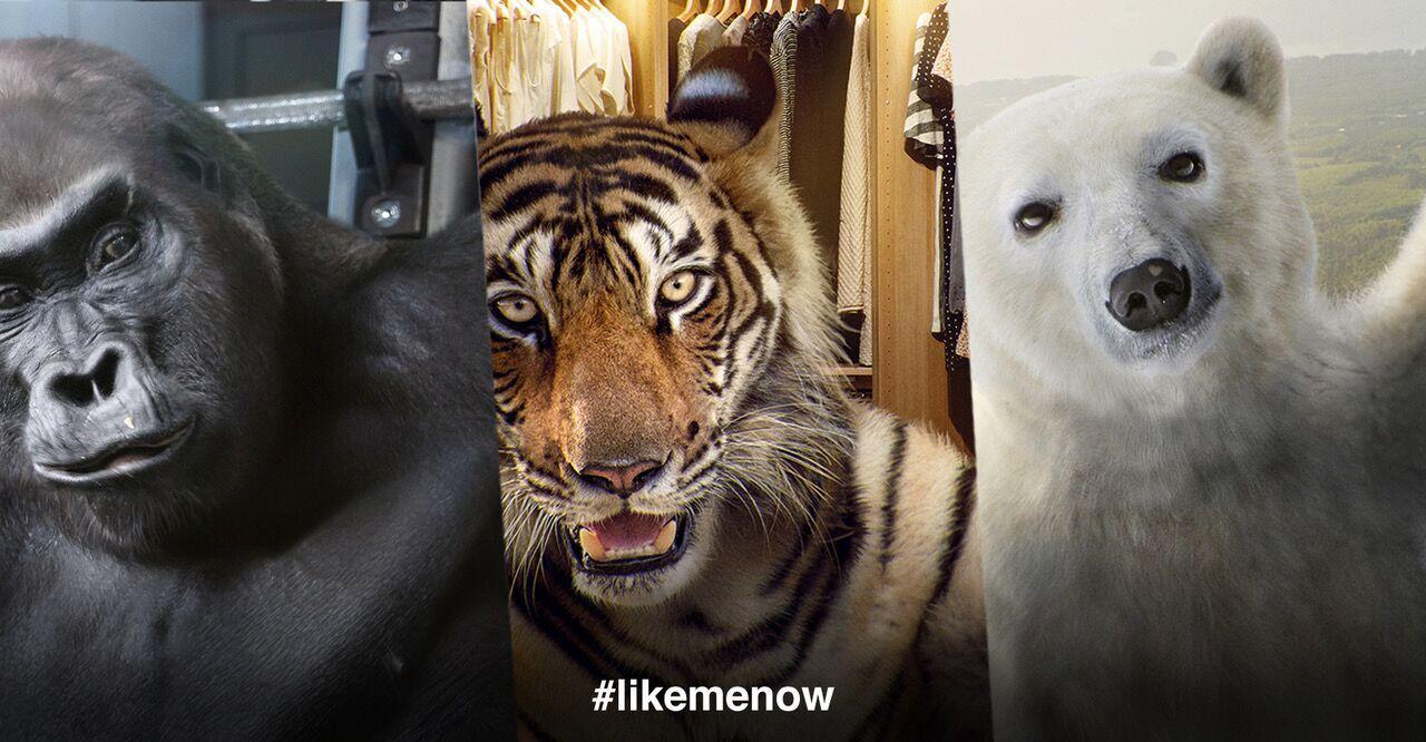 #LikeMeNow: tre influencer d'eccezione per salvarsi dall'estinzione