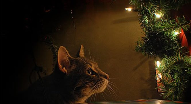 Decorazioni natalizie ed animali in casa