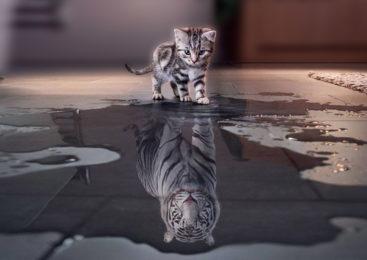 Grandi mici: alcuni tra i felini più spettacolari