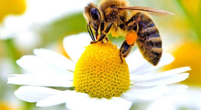 Le api e il riscaldamento globale