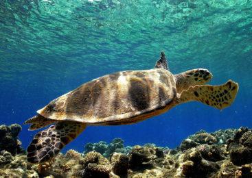 Il mistero delle tartarughe Caretta Caretta decapitate