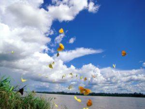 La salute dell'ambiente e le farfalle