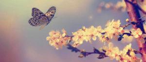 Farfalle e ambiente