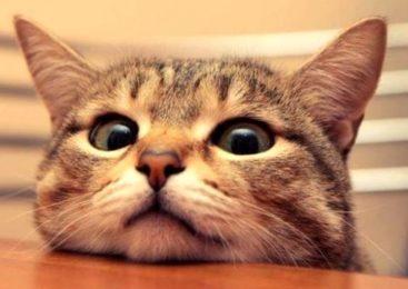 I gatti conoscono il proprio nome?